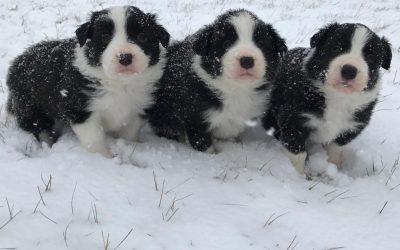 Schneetapsen