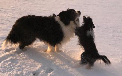 Die Buben haben Spaß im Schnee