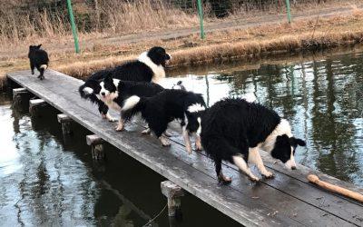 Ausflug zum Teich